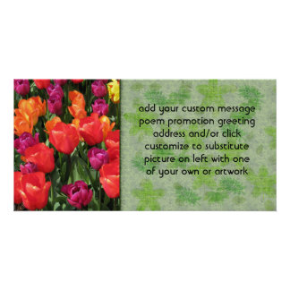 Rainbow Of Tulips Picture Card