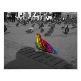 Rainbow pigeon poster