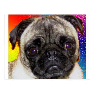 Rainbow Pug Postcard
