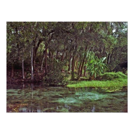 Rainbow Springs, Florida. Photograph