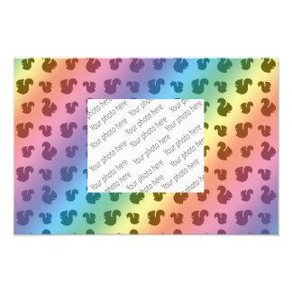 Rainbow squirrel pattern photographic print