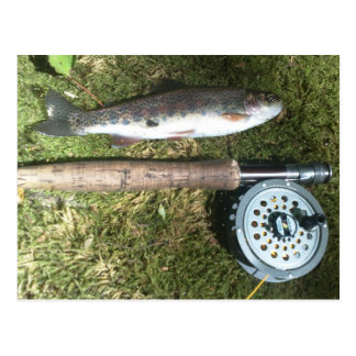 rainbow trout and fly fishing reel postcard