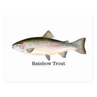 Rainbow Trout Fish Postcard