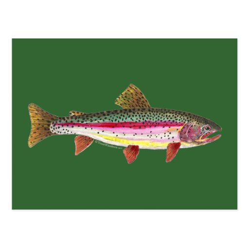 Rainbow Trout Fish Post Cards