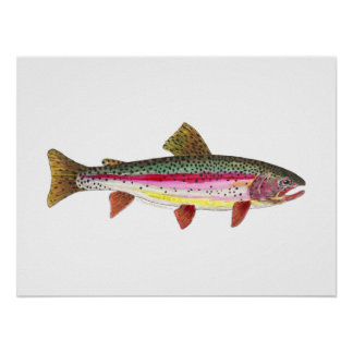 Rainbow Trout Fish Poster