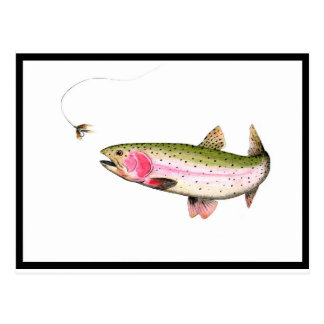 Rainbow Trout Fly Fishing Postcard