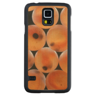 Rainbow Trout (Oncorhynchus Mykiss) Roe Carved Maple Galaxy S5 Case