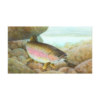 Rainbow Trout Painting Stretched Canvas Prints