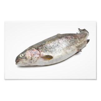 rainbow trout photographic print