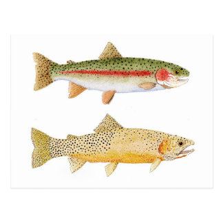 Rainbow Westslope Cutthroat Trout Postcard