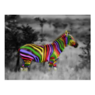 Rainbow Zebra Post Card