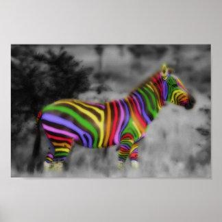 Rainbow Zebra Poster