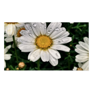Raindrop Daisies Pack Of Standard Business Cards