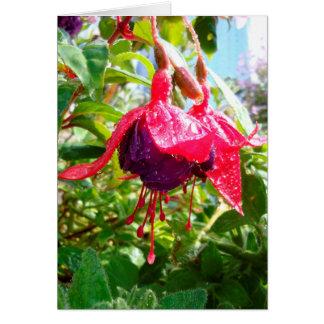 Raindrop Fuchsia greeting card