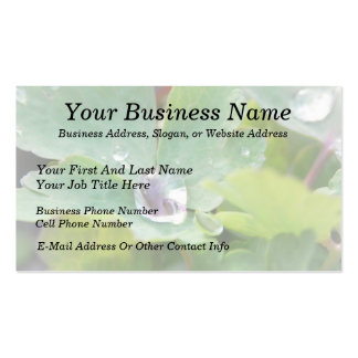Raindrop on Columbine Leaf Pack Of Standard Business Cards