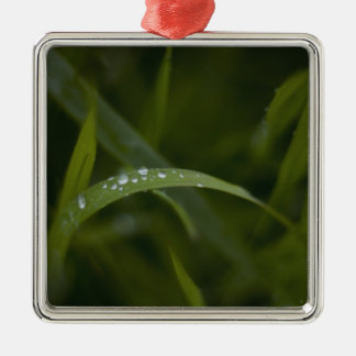 Raindrops on a Grass Leaf Silver-Colored Square Decoration