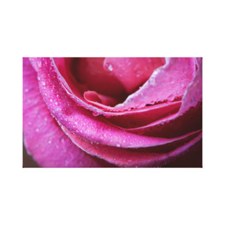 Raindrops on a pink rose canvas print