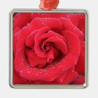 Raindrops on a Red Rose Christmas Ornament