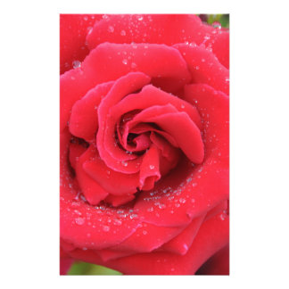 Raindrops on a Red Rose Stationery