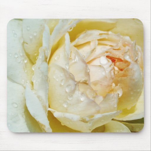 Raindrops on Champagne Blush  White Rose floral Mousepad