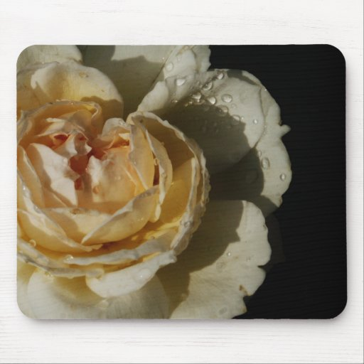 Raindrops on Champagne cream White Rose floral Mousepads