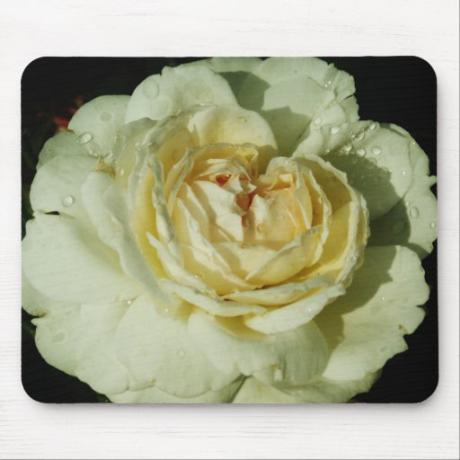 Raindrops on Champagne White Rose floral Mouse Pad