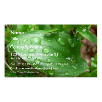 Raindrops On Green Leaf Double-Sided Standard Business Cards (Pack Of 100)