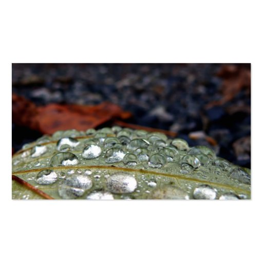 Raindrops on leaf business card template