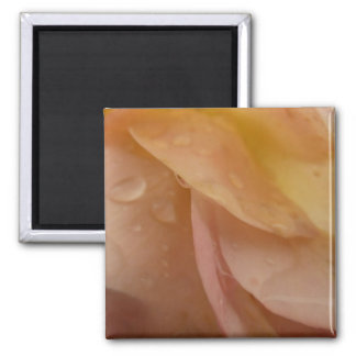 Raindrops on Rose Petals Pink Abstract Floral Square Magnet