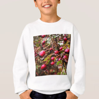 Raindrops On Rosehips Sweatshirt