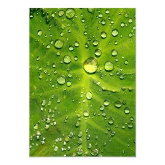 Raindrops on taro leaf 13 cm x 18 cm invitation card