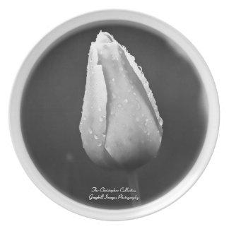 Raindrops On Tulip Plate