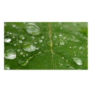 Rained Leaf Pack Of Standard Business Cards
