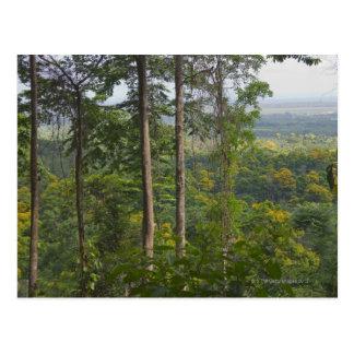 Rainforest 2 postcard