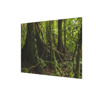 Rainforest, Mapari River North Rupununi, Canvas Print