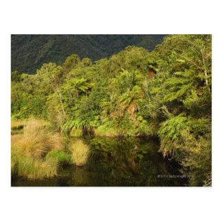 Rainforest, South Island, New Zealand Postcard