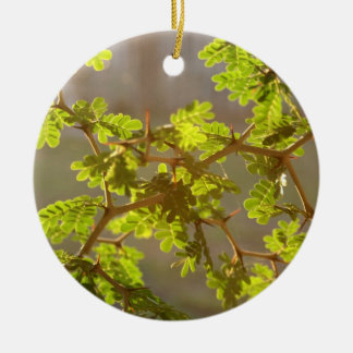 Raintree Branches Bonsai Photo Round Ceramic Decoration