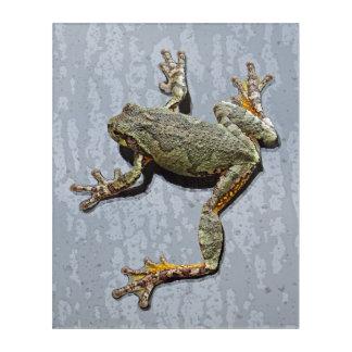 Rainy Day Tree Frog On Glass Acrylic Print