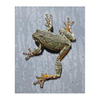 Rainy Day Tree Frog On Glass Acrylic Wall Art