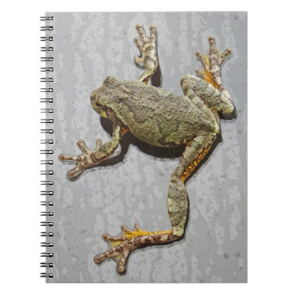 Rainy Day Tree Frog On Glass Notebook