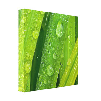 Rainy drops II Gallery Wrapped Canvas
