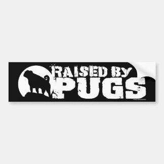 RAISED BY PUGS black bumper sticker