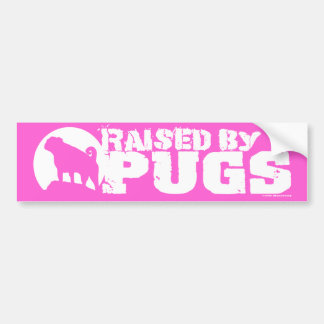 RAISED BY PUGS Pink Bumper Sticker