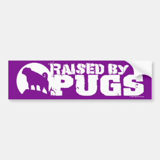 RAISED BY PUGS Purple Bumper Sticker
