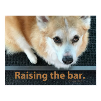 Raising the Bar Corgi Postcard