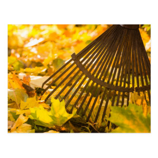 Rake And Leafs Postcard