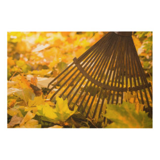 Rake And Leafs Wood Print