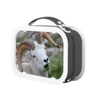 Ram Lunch Box