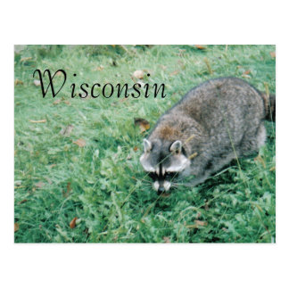 Ramblin' Raccoon Postcard