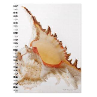 Ramose Murex (Chicoreus ramosus) shell against Notebook